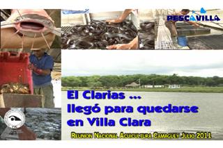 EL CLARIAS LLEGO PARA QUEDARSE